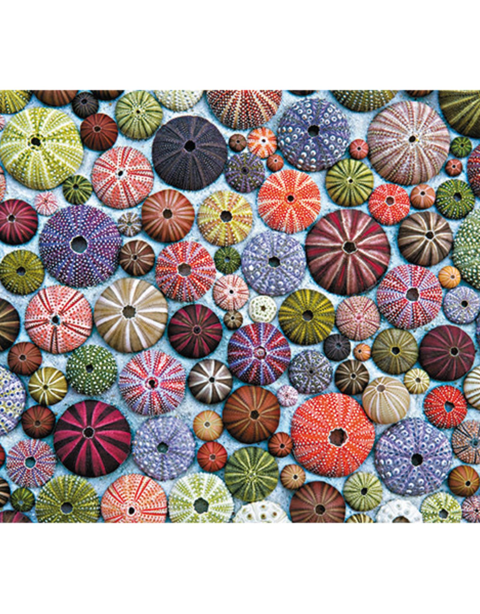 Piatnik Sea Urchins 1000pc