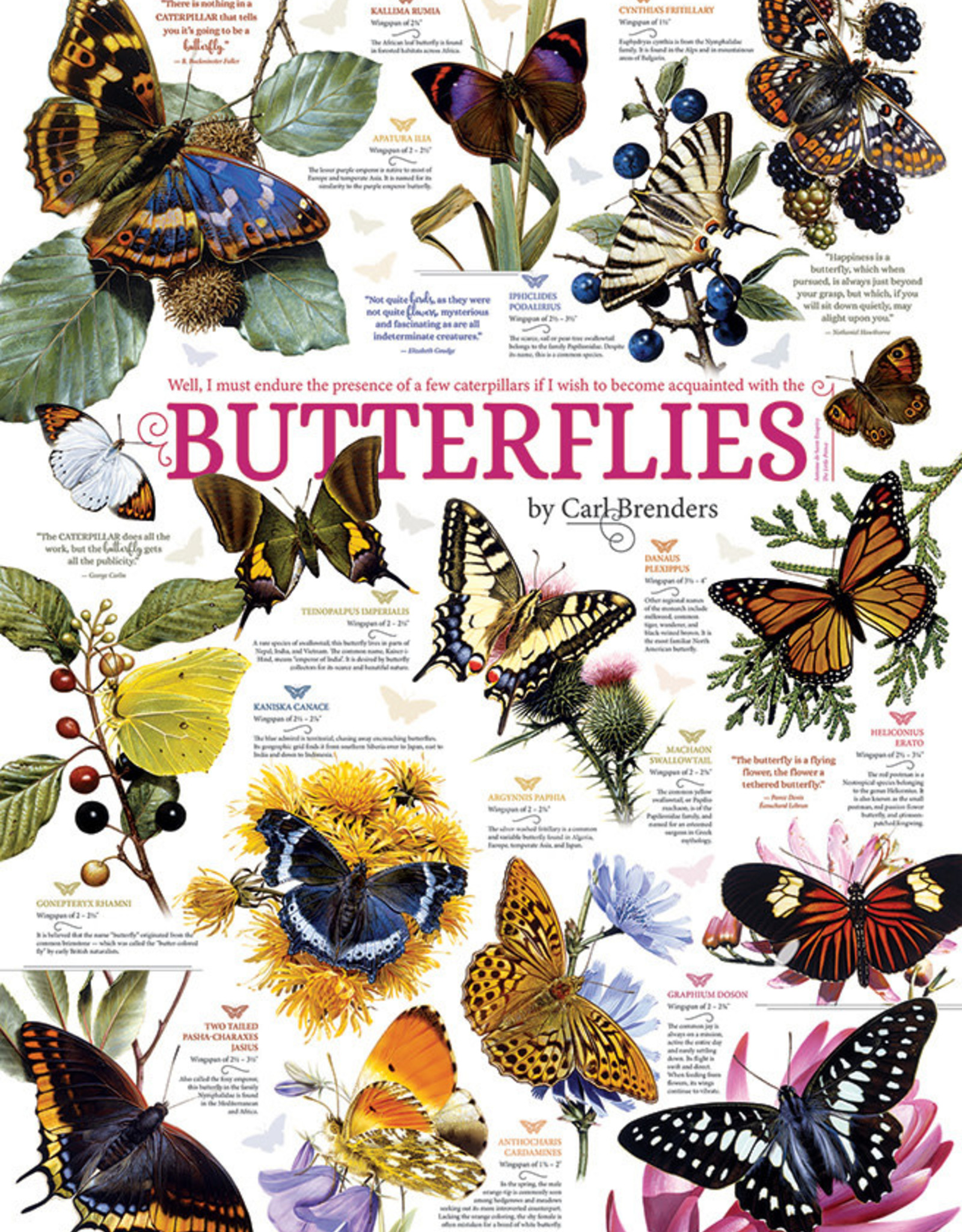 Cobble Hill Butterfly Collection 1000pc