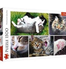 Trefl MONTAGE CATS 1500pc