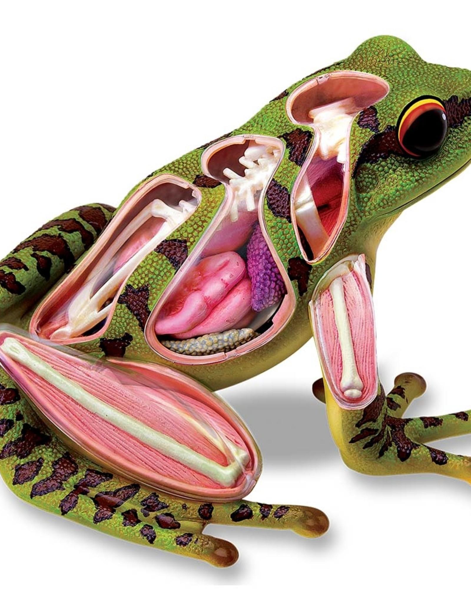 TEDCO 4D Frog