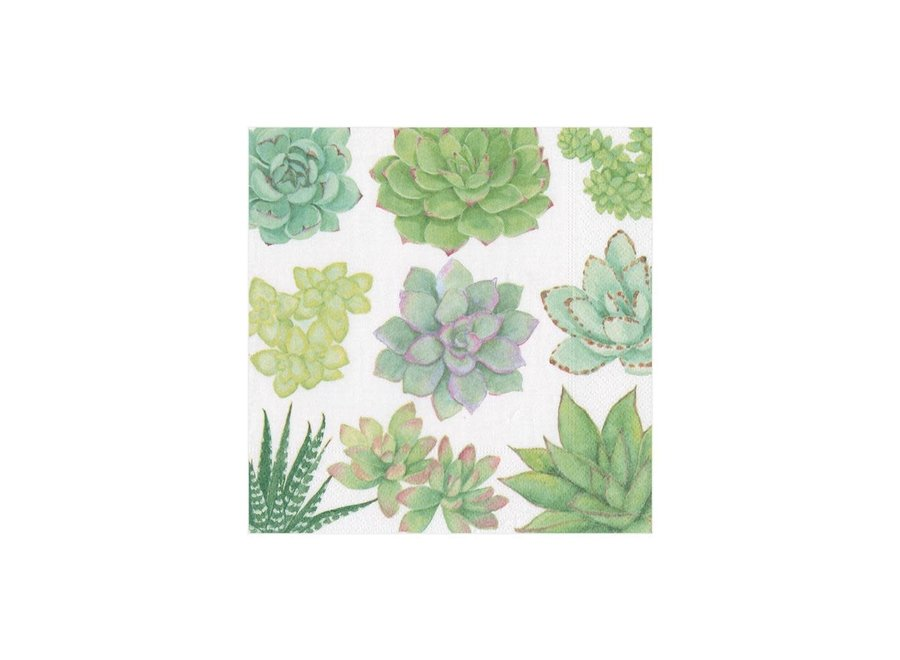 Succulents Paper Cocktail Napkins - 20 Per Package