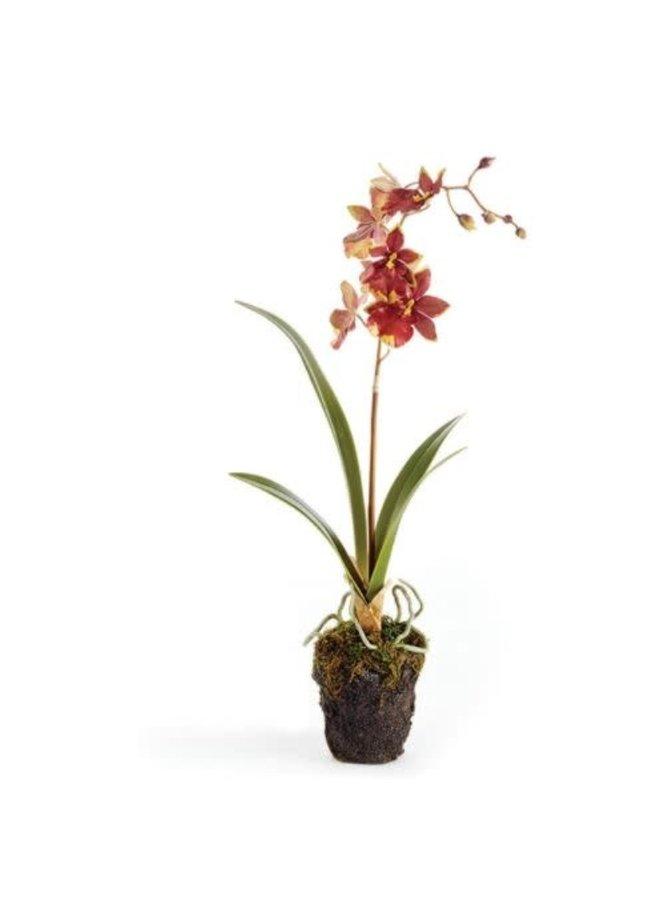 """Dancing Orchid Drop-In 15"""""""