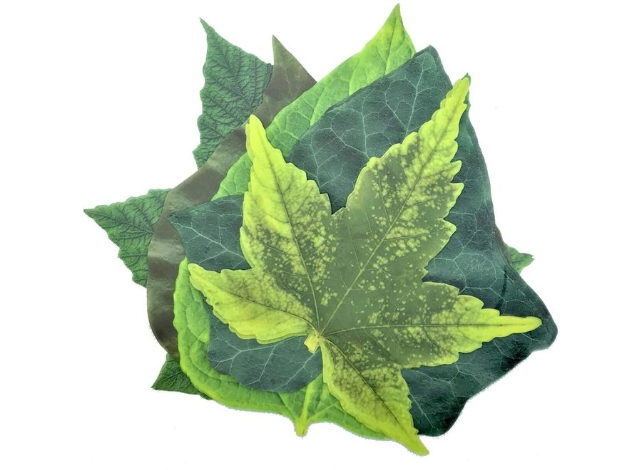 Parchment Cheese Leaves – Spring Leaves Variety Pack of 20