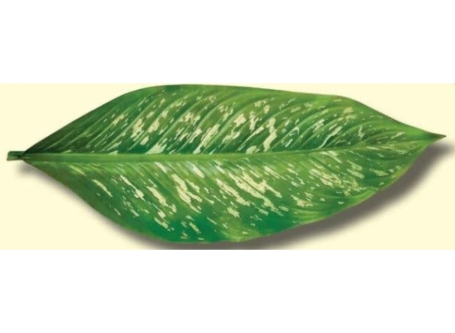 Parchment Cheese Leaves – Tropical Leaves Variety Pack of 5