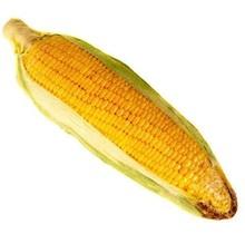 Catnip Plush Corn On The Cob Cuddle Toy