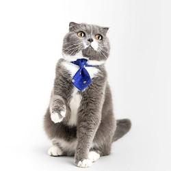 Pidan Pet Necktie