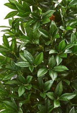 Nearly Natural 4 ft. Indoor/Outdoor Bay Leaf Artificial Topiary Tree