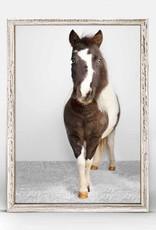 Greenbox Art Petite Ponies Domino Mini Framed Canvas