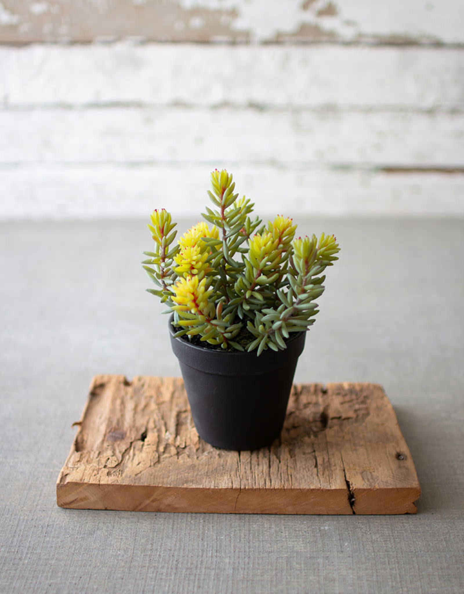 Kalalou Artificial Succulent in a black plastic pot