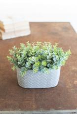 Kalalou Artificial Eucalyptus in a cement pot