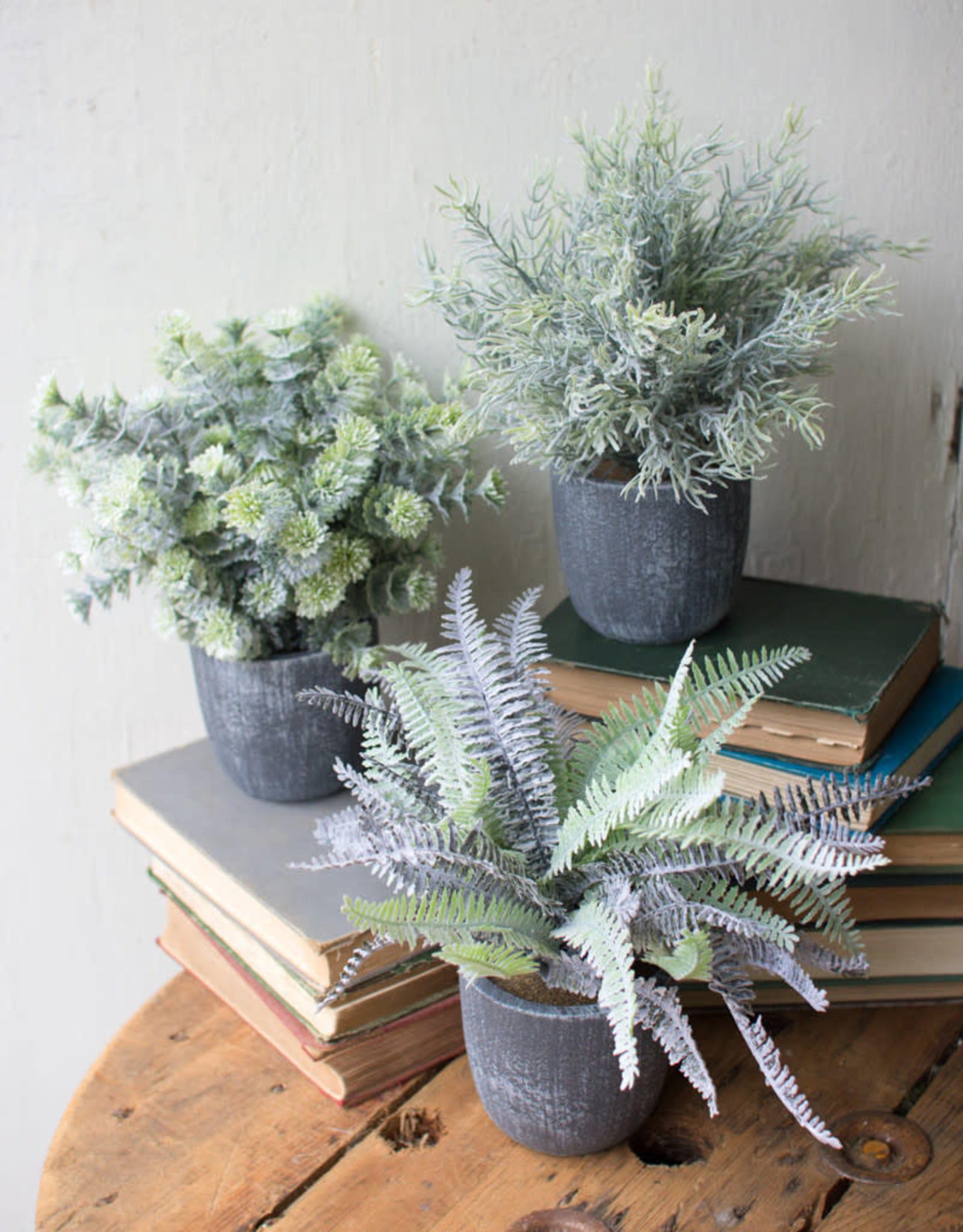 Kalalou Fern Succulent with round grey pots