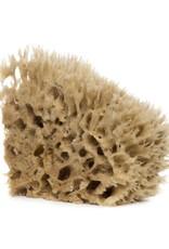 Barr-Co Sea Wool Sponge