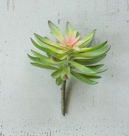 Kalalou Flower Succulent
