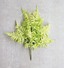 Kalalou Fern Bundle