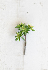 Kalalou Artificial Succulent Stem