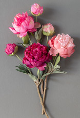 Park Hill Collection Summer Peony, Pink Cerise Mix, 3 Assorted Colors