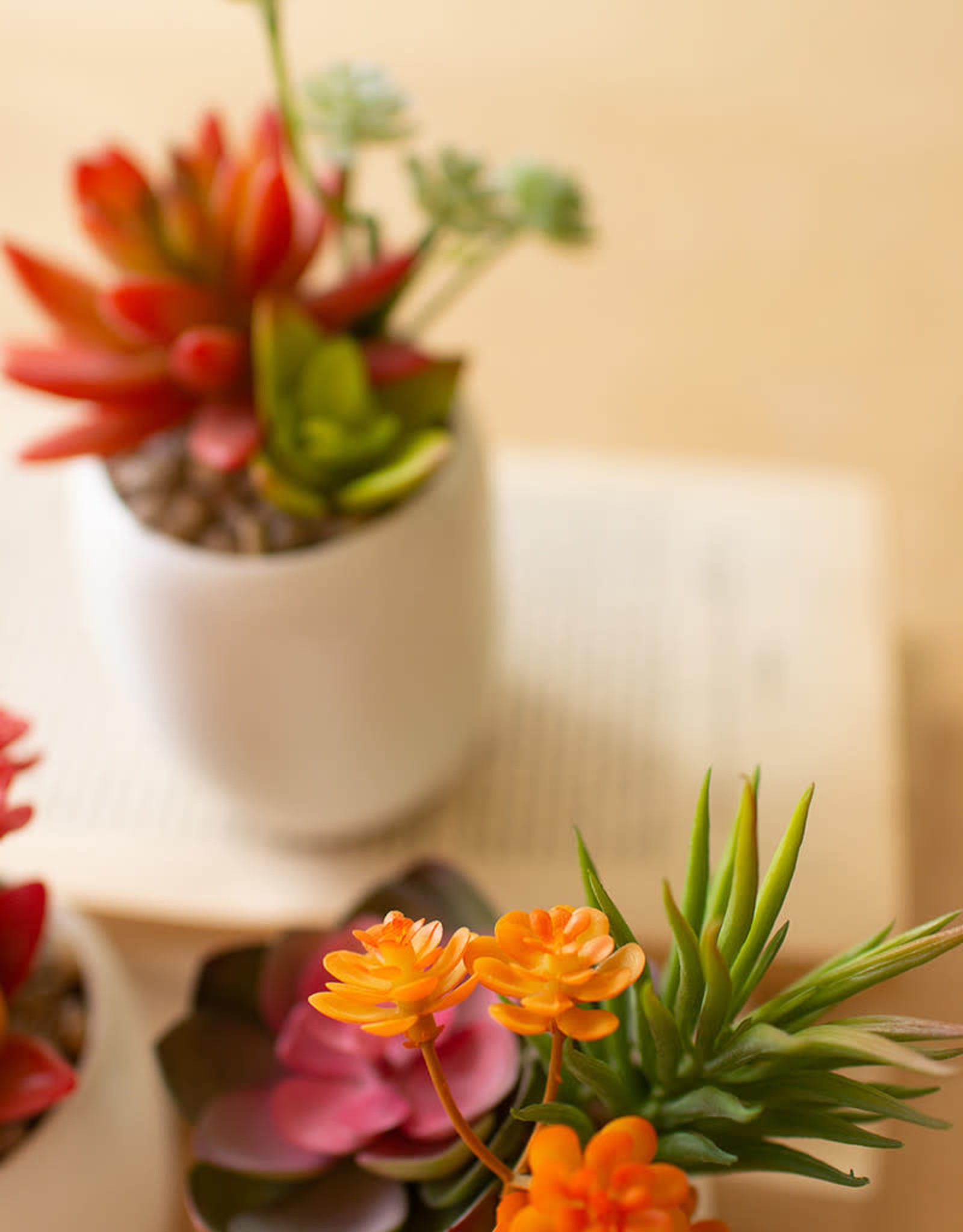 Kalalou Artificial Succulent Plants in a White Ceramic Pot (set of 3)