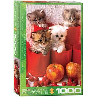 Eurographics Kittens in Pots