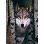 Eurographics Gray Wolf