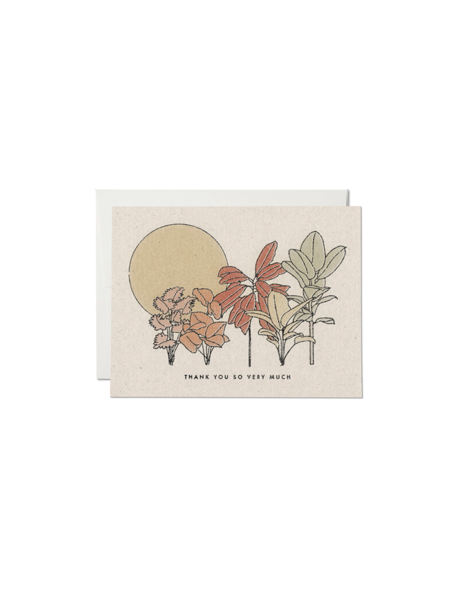 Red Cap In Desert Plants Thank You Card