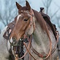 WEAVER WEAVER COUNTRY CHARM COLLECTION BROWBAND