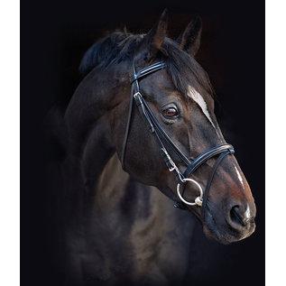 HORSEWARE IRELAND HORSEWARE AMIGO BRIDLE