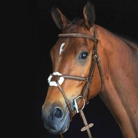 COLLEGIATE COLLEGIATE FIGURE 8 RAISED FANCY STITCHED BRIDLE *CLR*
