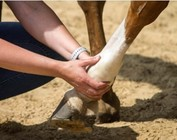EQUINE HEALTH CARE