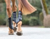HORSE BOOTS/BANDAGES