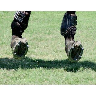 CAVALIER HORSESHOE STUDS