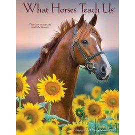 WILLOW CREEK PRESS 2021 ENGAGEMENT CALENDAR - WHAT HORSES TEACH US