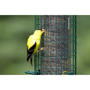 SQUIRREL BUSTER BIRD FEEDER - SQUIRREL BUSTER FINCH