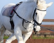 SIDE REINS/LUNGEING SYSTEMS