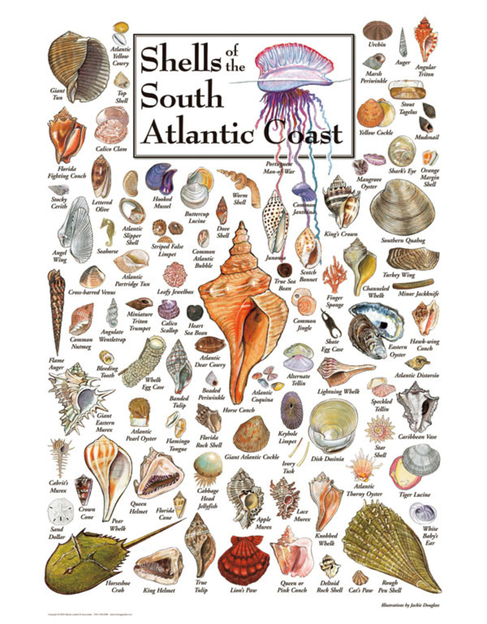 Heritage Puzzles Shells of the South Atlantic Coast Puzzle