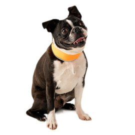 Cooler Dog Cooler Dog Small Reflective Cooling Collar