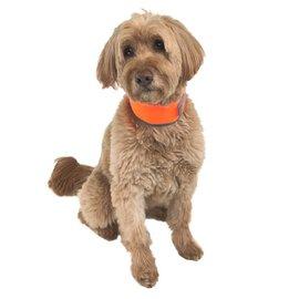 Cooler Dog Cooler Dog Medium Reflective Cooling Collar