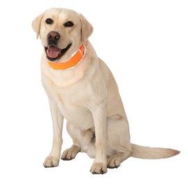 Cooler Dog Cooler Dog Large Reflective Cooling Collar