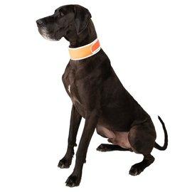 Cooler Dog Cooler Dog XL Reflective Cooling Collar