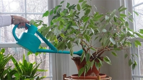 Conservatory Can - 2.25L