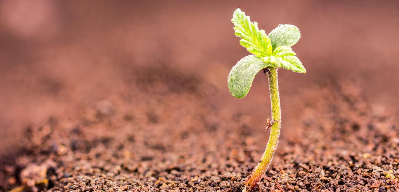 Grow Weed Canada