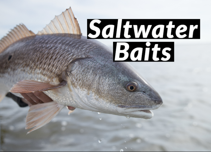 Saltwater Baits
