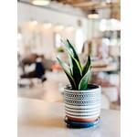 Pots & Plant Stands