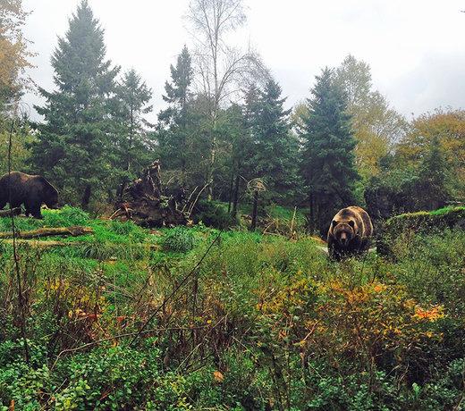 Bear Spray & Canisters