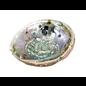 Medium Abalone Shell