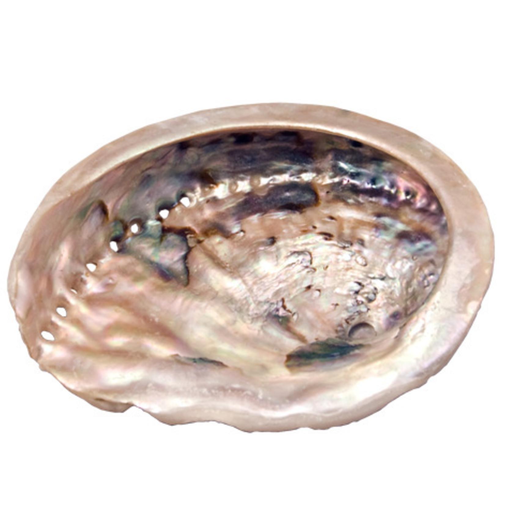 """Abalone Shell Small 2-3"""""""