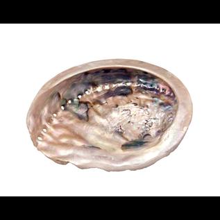 Abalone Shell Small