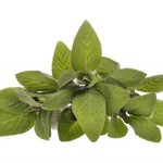 Sage Natural & Undiluted Essential Oil