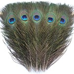 Peacock Feather (Small)
