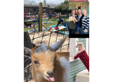 Goat Activity/Goat Experience