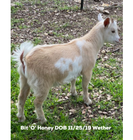Fancy Goat Boutique Goat for Sale-Wether/Buck